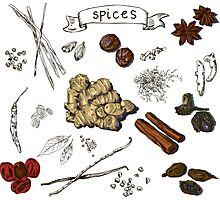illustration background with hand drawn spices Photographic Print