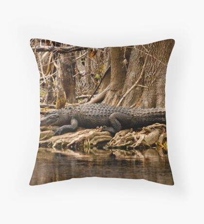 Gator, St. Johns River, Florida Feb. 2009 Throw Pillow