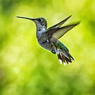 HUMMER1 by J. Day