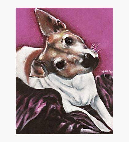 Jack Russel Terrier Photographic Print
