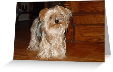 The Yorkie at the Antique Cottage by May Lattanzio