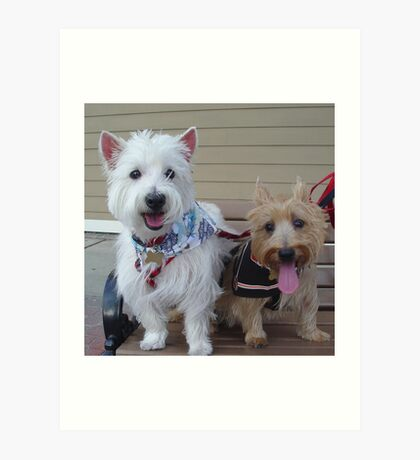Westie and Cairn Art Print