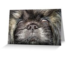 Pekingese Greeting Card