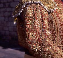 Matador Jacket-Gold by Tamarra