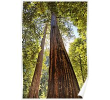 The Redwoods Poster