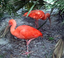 Birds at Zoo by icemaiden6173