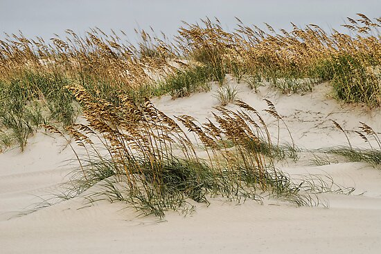 North Carolina Dunes by Andreas Mueller