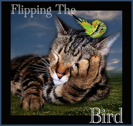 Flipping The Bird by Elizabeth Burton
