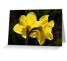 Daffodils - Impressions Greeting Card