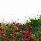 Red Flowers by the Sea by artgoddess