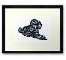 Black Miniature Poodle Lay Pretty Framed Print