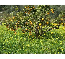 Oranges and Lemons Photographic Print