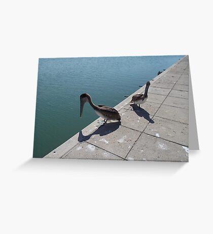 Brown Pelicans (Pelecanus occidentalis) Greeting Card