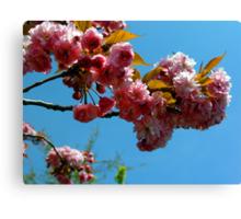 Ornamental Cherry Blossoms Canvas Print