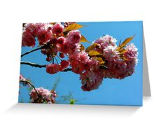 Ornamental Cherry Blossoms Greeting Card
