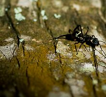 Rusty Ant by WLphotography
