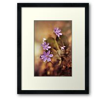 Afternoon impression with liverworts Framed Print