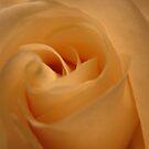 Love Unfolding by Diane Petker