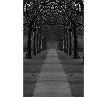 London Trees Photographic Print