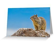 California Ground Squirrel, (Spermophilus beecheyi) Greeting Card