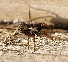 Here's looking at you and you and you (spider) by GrahamCSmith