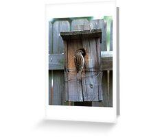 House Sparrow Returns Home Greeting Card