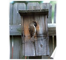 House Sparrow Returns Home Poster