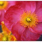 Floral Series-1 by Tamarra