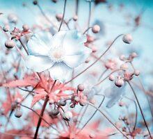 Noisy flowers by MaxL
