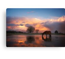 Fire In The Sky - New Forest Canvas Print