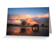 Fire In The Sky - New Forest Greeting Card