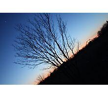 slanted view of tree Photographic Print