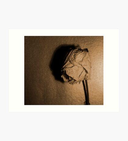 Dried rose.. Art Print