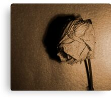Dried rose.. Canvas Print