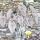 Water Lily and Elephant Ears by Sarah McKoy