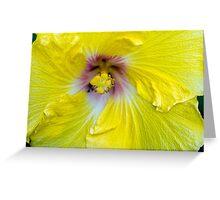 Yellow Hibiscus SRF 17 5799 Greeting Card
