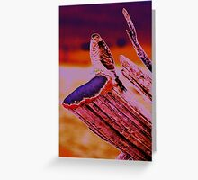 Sunset Sharp-shinned Greeting Card