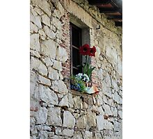 Vineyard Sill Photographic Print