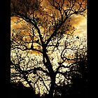 Black Tree, Gold Sky by Peri