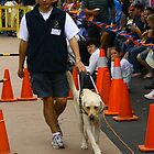 Guide Dogs Open Day by Guyzimij