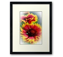 Summer colour Framed Print
