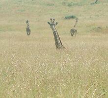 Three Giraffs by Sarah  Lawrence