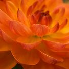 Fire Within by Jenni77
