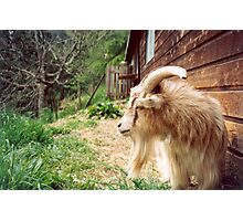billy goats gruff Photographic Print