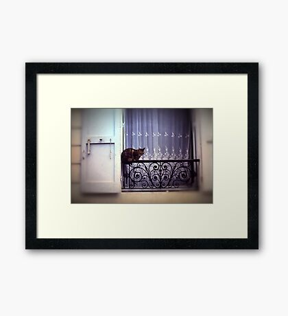 Vintage Cat on a Balcony in Paris Framed Print