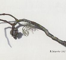 Monterey Cypress Twig by NearBird