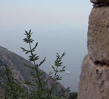 View from Eze by Sheri Greenberg