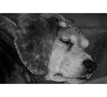 Snore Photographic Print