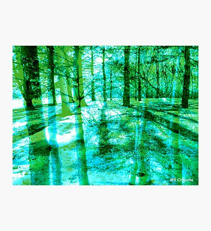 Colorful Forest Trees Green Turquoise Photographic Print