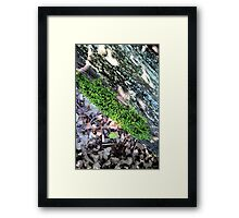 Moss grows on a rolling wood Framed Print